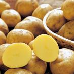 ジャガイモ・十勝こがね(トカチコガネ)の種芋(1kg)