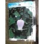 【お買い得価格】【魅惑のクレマチス・お福】4.5号芽だし充実苗・ヴィオルナ系