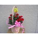 母の日の贈り物可愛いプードルと真っ赤なカーネーションバスケット入りカーネーション鉢植え