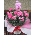 ショッピング母の日 母の日ギフトカーネーション鉢植え母の日の大定番 高品質ピンクのカーネーション鉢植えプードルピック