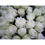 ショッピングバラ お誕生日 歳の数だけ 結婚記念 御祝 サプライズのプレゼント 国産高品質白バラのブーケ