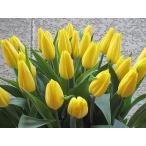 Yahoo!Hanakuma Yahoo!店チューリップのぶーけ ストロングゴールド誕生日 記念日 御祝 お見舞い 自分へのプレゼントに 雪国から高品質の春の香りクイックお届け