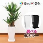 観葉植物 ユッカ(青年の木)7号角高陶器鉢(白黒) H約1.1m 開店祝い インテリア 人気