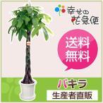 観葉植物 パキラ10号プラスチック鉢 開店祝い 新築祝い