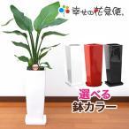 観葉植物 ストレリチア・オーガスタ 7号角陶器鉢L 送料無料 人気