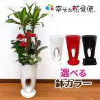 観葉植物 寄せ植え(ユッカ)7号穴高陶器鉢 人気 開店祝い インテリア ランキング