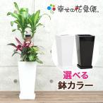 観葉植物 寄せ植え(ユッカ)6号角高陶器鉢 人気 新築祝い お返し インテリア