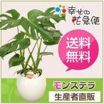 新築祝いなど各種お祝いやお返しに人気の観葉植物モンステラ