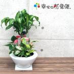 観葉植物 寄せ植え(ユッカ)7号角浅陶器鉢 人気 ランキング