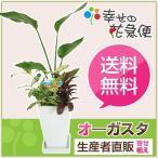 観葉植物 寄せ植え(オーガスタ)6号角陶器鉢 インテリア 人気ランキング