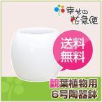 大人気!!シンプルでおしゃれなデザインの観葉植物陶器鉢/白