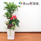 観葉植物 寄せ植え(ユッカ)9号陶器-角鉢 開店祝い 人気 大型