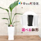 観葉植物 ストレリチア・オーガスタ 6号高陶器-角鉢 送料無料 インテリア 人気 観葉植物
