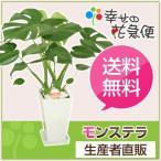 開店祝いなど各種お祝いやお返しに人気の観葉植物モンステラ