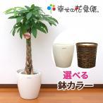 観葉植物 パキラ8号プラスチック鉢(鉢カバー付) 開店祝い 新築祝い