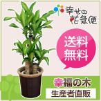 観葉植物 幸福の木7号プラスチック鉢(茶カゴ) 高さ約90cm