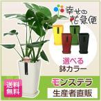 5色選べるカラフルデザインポット!人気の観葉植物モンステラ