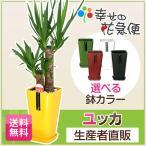 人気の観葉植物ユッカは開店祝いなど各種お祝いにおすすめ