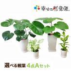 選べる観葉植物4点Aセット 人気 開店祝い