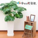 観葉植物 モンステラ8号高陶器-角(白) 人気 新築祝い インテリア