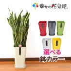 観葉植物 サンスベリア8号カラーポット