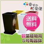 ショッピング鉢 5号角陶器鉢(白赤黒) A-035 スクエア 観葉植物 植木鉢