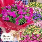 母の日の贈り物 ワンサイズビッグな特別栽培6号カーネーションや色変わりあじさい!  *関東甲信越地域以外は別途送料がかかります