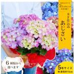母の日 あじさい 紫陽花 アジサイ5号 鉢植え 花 2021 プレゼント ギフト 17種類から選べる こだわりラッピング