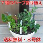 キッチンハーブ7種寄せ植え我が家のミニ・ハーブガーデン必要な時にちょこっと、つまんで!8号鉢に7種の使い勝手の良いハーブを寄せ植え