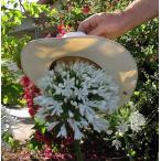宿根草 驚きの大輪アガパンサス  ホワイトヘブン  直径15cmポット苗