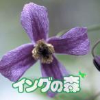 クレマチス 花 苗 多年草 リトル・ボーイ 秋 夏 インテグリフォリア 4.5号サイズ 2年生 ポット苗