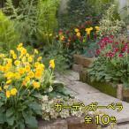 ガーデン ガーベラ ガルビネア 選べる7色1株 宿根