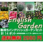 春待ちイングリュシュガーデニングセット お手軽バージョンPart1  宿根草を中心に今から植えて春からの開花を楽しむセットです 送料無料・他品同梱不可