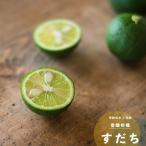 果樹 苗木 すだち スダチ 鉢植え 夏 1年生 接ぎ木 4.5号 13.5cm ポット 柑橘類 常緑樹 香酸