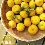 2016年新苗・果樹苗 常緑低木 柑橘系  種なしゆず 多田錦  4.5号(直径13・5cm)ポット