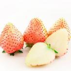 イチゴ 果実 苗 いちご 桃香 苺 宿根草 9cmポット苗 1個