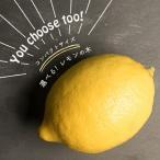 果樹苗 柑橘 レモン 苗木 5品種から選べる レモンの木 コンパクトサイズ 接木 6号18cm スリット鉢植え 果樹苗木 柑橘類 常緑樹 送料無料 他品同梱可