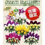 見元園芸さんのオリジナルビオラ スターラビットシリーズ6種から選んで1株(数量限定品)