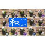 和すみれ コレクション 全13種 直径8.3cmミニ鉢