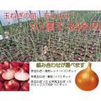 プランターで簡単に作れる健康野菜 玉ねぎの苗 赤玉ねぎ?それとも甲高玉ねぎ? 選べる10ポットセット
