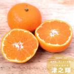 果樹苗 柑橘類 苗木 津之輝 PVP (つのかがやき) 1年生接ぎ木 4.5号(直径13.5cm) ポット苗 果樹苗木 常緑樹