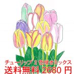 短期間で咲かせるチューリップ  いろんな2色咲きまとめて100球  1箱にカラフル2色タイプを100球 *送料無料・他品同梱OK