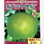 ナシ 果樹 苗木 秋 二十世紀 梨 4.5号 13.5cm ポット 落葉中高木 鉢植え なし