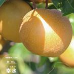 果樹苗 なし 苗木 和梨 幸水 4.5号(13.5cm) ポット苗 果樹苗木 ナシ 落葉樹