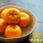2016年新苗・果樹苗 常緑低木 柑橘系  ポンカン  4.5号(13.5cm)ロングポット