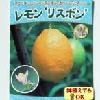 2016年新苗・果樹苗 柑橘 YDレモン リスボン 4.5号(直径13.5cm)ポット