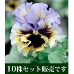 パンジー フリル咲き フリズルシズル イエローブルースワール 10.5cmサイズ大ポット 10個セット パンジー ビオラ すみれ 苗 寄せ植え