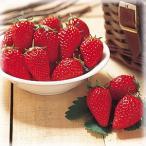 甘〜いイチゴと言えば 『章姫(あきひめ) 1株』