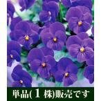 ビオラ ビビ オーシャンブルー ポット苗 1個 花苗 すみれ パンジー ビオラ 苗 イングリッシュガーデン 寄せ植え