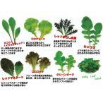 業務用小分け ベビーリーフ 種 タネ ルッコラ、ロロロッサ、チコリーなど7種セット 栽培